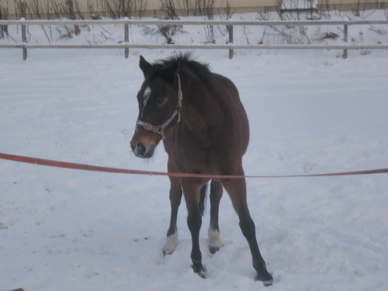 Kävin myös hevostallilla hevosia joulutervehtimässä. Mahtavaa juhlaa ulkona.
