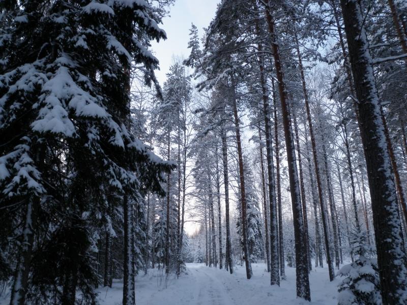 Uudenvuodenpäivän päivälenkki lumiseen metsään ja järville. Kaunista talvikeliä. Ihan kuin lapsuuden talvina konsanaan.