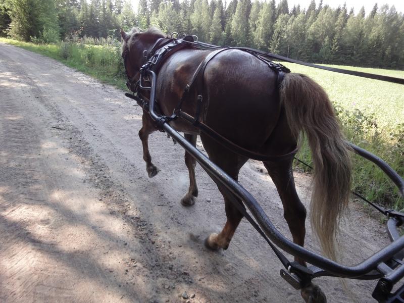 Tänään aamun ratsastusten jälkeen vielä hellenpäivän treeni Siron Veijarille alias Veikolle. Upeat maisemat ja se tunnelma.