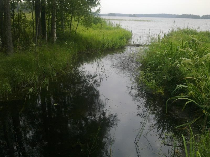 Tällaisia metsäojia järvemme ovat täynnä. Ne tuovat aikamoisen ylimääräisen ulkoisen kuormituksen järviimme. Tämä oja on nyt tarkoitus laittaa kuntoon yhdessä toisen maanomistajan kanssa vaikka oja kerääkin vedet isolta alueelta aina pelloilta ja osittain suoltakin asti.