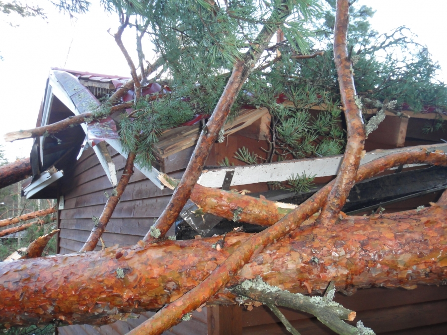 Tapani 26.12.2011 myrsky teki Pekkalan mökillämme pahaa jälkeä. Toistakymmentä isoa honkaa ja koivua nurin ja kolme rakennusta kattoineen niiden alla. Taitaa tulla isot remontit kun kattotuolit ja aluslaudoitukset ja muut pettäneet. Aika lohduton on näky.