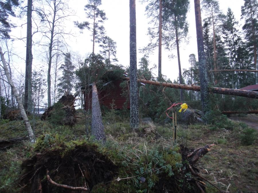 Toistakymmentä ikihonkaa on kyljellään ja tuho sen mukaista. Sähkötolpat menivät nurin siinä matkassa ja sähköistä ei tietoakaan.