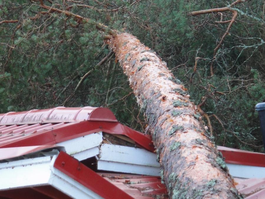 Kattotuolit ja rakenteet pettivät honkien alla. Pelti antoi tottakai periksi, mutta kattotuolitkin paukkuivat ja edelleen aikamoisessa jännityksessä.