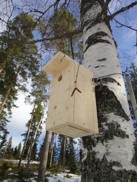 Ja yksi uusi yksiö tässä. Eilen nikkaroimme ja tänän kiipeilin puuhun.