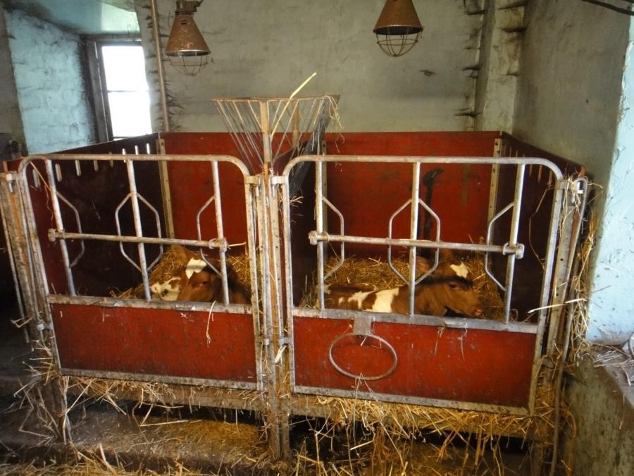 Ja tässä Portaankorvan tuoreet kaksoset :)