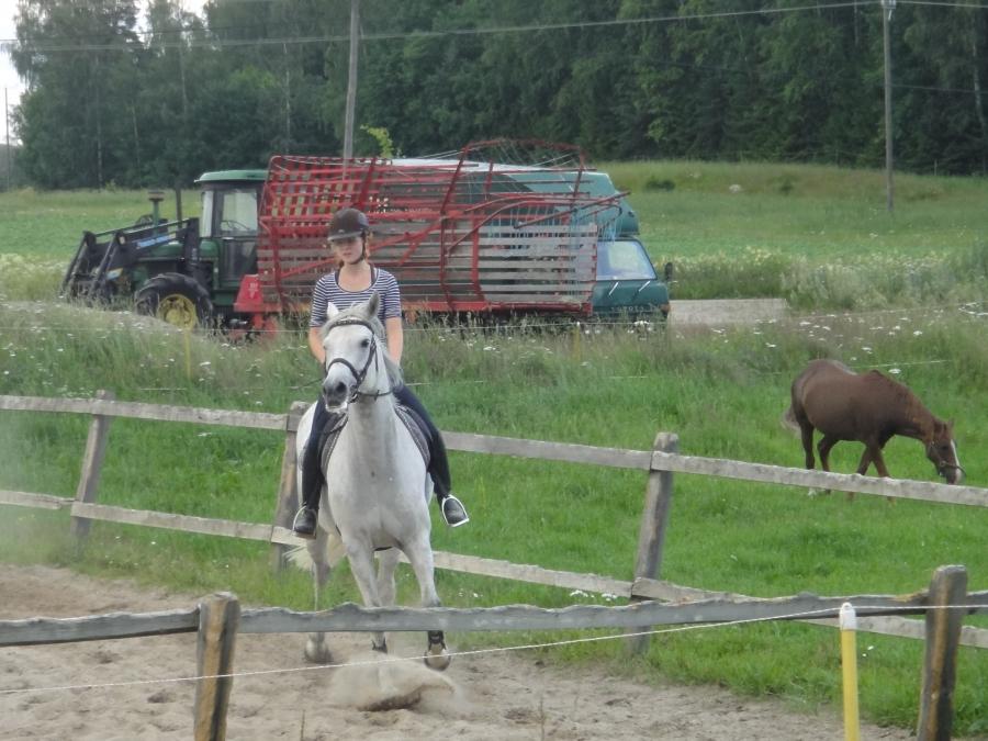 Niina Nippe Laine Klaaran kanssa valmistautumassa viikonlopun thDERBYn. Nippe on sellainen ratsastaja joka voi yllättää ja kisata aina jopa Timon Törpöstä eli kisan voitostakin.