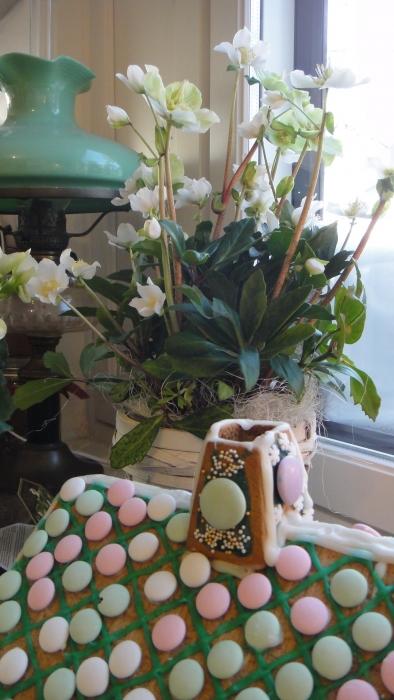 Saimme aivan ihana jouluruusun hyvältä ystävältä ja entiseltä pomoltani. Upea kukka joka pärjää Suomessa ympäri vuoden ulkonakin ja se tuleekin saamaan paikan Loppijärven rannalta ja siellä se tulee elämää kanssamme jatkossa kevään ensimmäisenä kukkana läpi sulavan lumen. Kiitos KM.