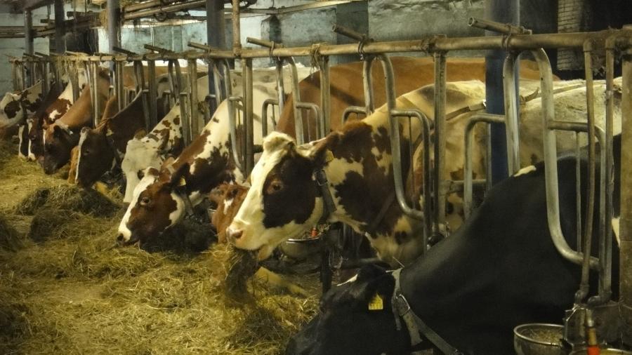 Tänään illalla kävin jälleen Portaankorvan maitotilalla Hunsalassa. Hieno ja puhdas navetta mistä se paras aito suomalainen maito tulee.