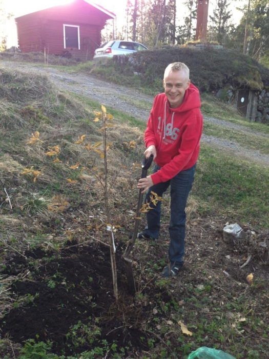 Puut ovat mun juttu. Tänä keväänä jo muutama uusikin tulokas Pekkalaan. Tässä eilen illalla istutin uuden kirsikan ja tänään aamulla Eurooppa-päivän kunniaksi pylväsomenapuu
