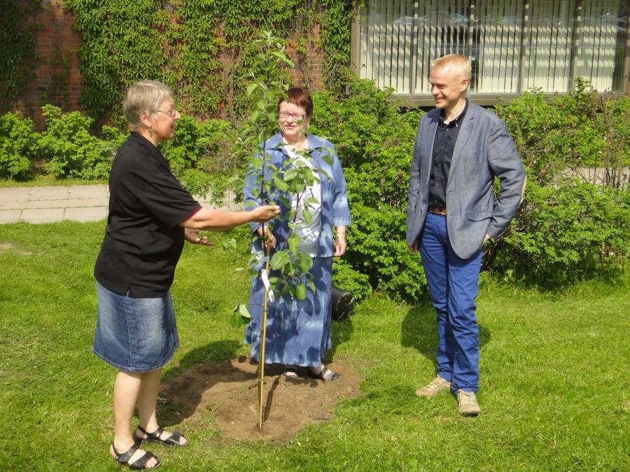 Ja tässä Tarjan ja minun kanssani kirjastomme uusi johtaja Leena Ylihalla joka otti kirjastonväen kanssa omenapuun hoidettavakseen.