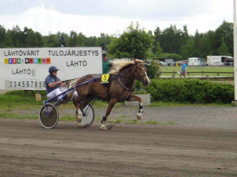 Jari Nylund oli tänään matkassa kahdella hevosella. Ensin Alviira ja sitten Siron Veijari. Alviiralle tänään lähtölaukka, mutta Veikko teki erinomaisen juoksun ja oli lähtönsä kolmas maalisuorataistelun jälkeen.