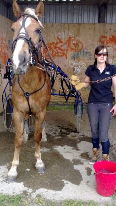 Ja lämmintä riitti varikollakin. Tiina Seppälä laittoin Jari Nylundin hevoset jälleen kisakuntoon yhdessä Minna Variksen kanssa. Ensi viikonloppuna sitten matkaamme Kouvolaan ja siellä Hurja-Ero kaviouralla ja huikea finaali.