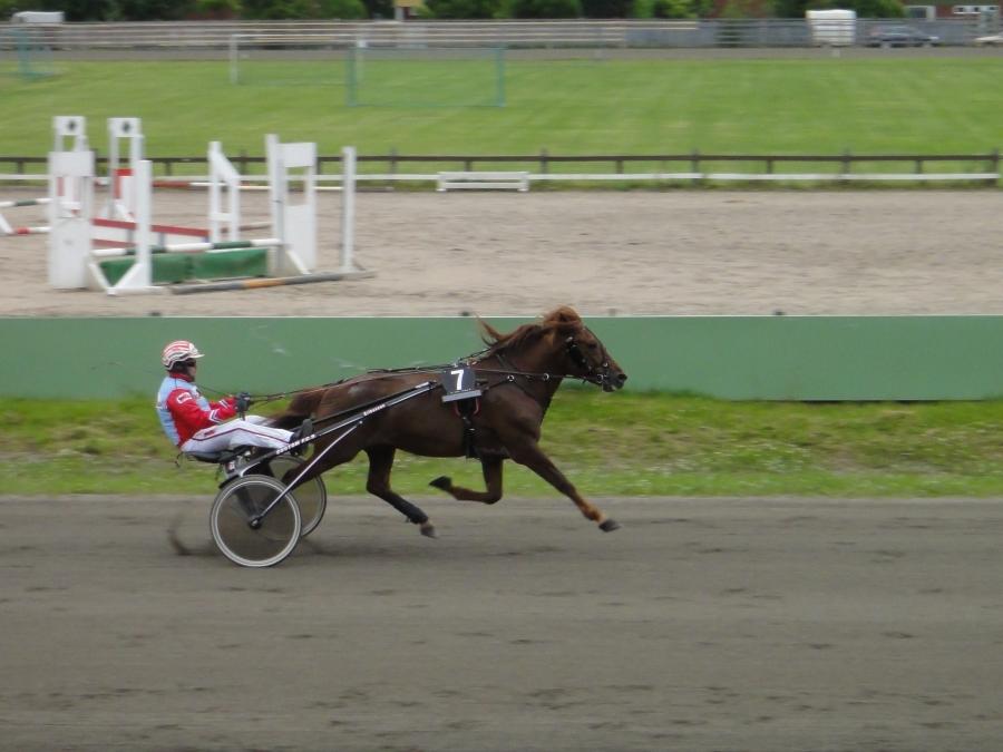 Ravikuningas Erikasson kuitenkin löysi yllättävän voittajansa kun Lopen Joivi juoksi päälähdön voittoon. Onnea Louhelaisen Suville ja koko Joivin taustajoukoille. Olipa hieno tunnelma kotikatsomossa kun Joivi kiri voittoon.