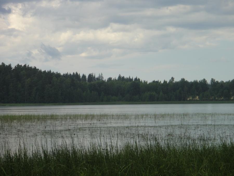 Tässä siis ojansuu Kuljunlahden puolelta... Aika upea hetki kun Torkinmäeltä tänne kanavalle laskeuduin niin lentoon lähti tuosta lahdelta kolme torkkia (storkia) eli haikaraa. Kuin Sotamies Storkin kunniaksi.