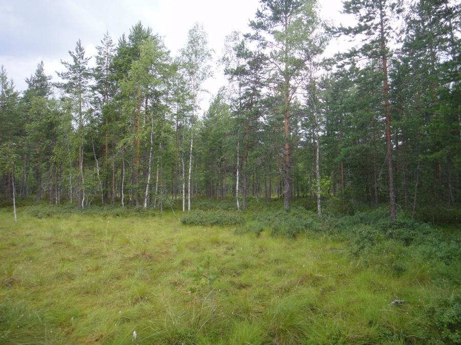 Torkinmäen juurella on sitten Torkinsuo. Nimensä paikat ovat saaneet sotamies Adam Storkin nimestä. Ja harmaahaikaroita nyt alueella eli nimi sopii paikalle senkin suhteen.