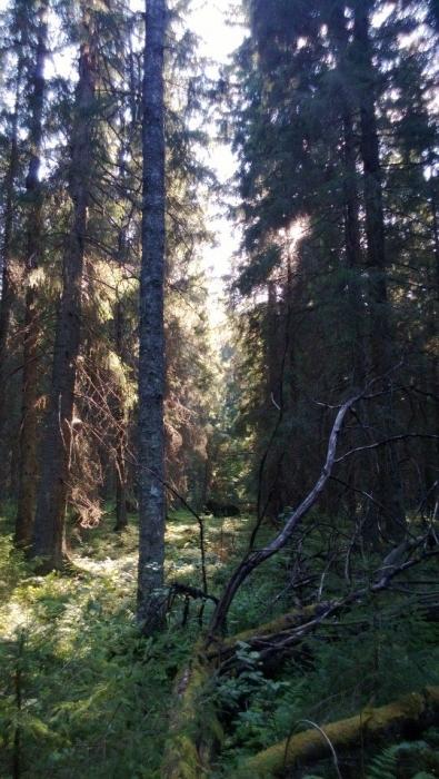 Ja jylhää metsikköä retkemme tarjosi ja kauniita avokallioitakin.