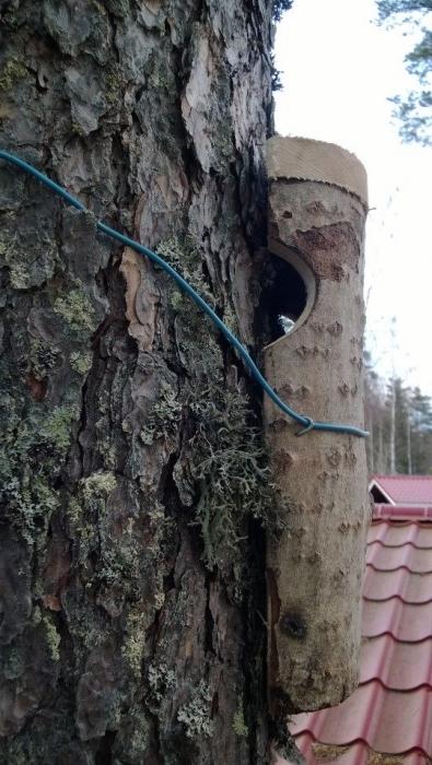 Ja tuollainenkin pönttö tänään paikkansa löysi. Eli puukiipijälle hieman omanlainen koti täksi suveksi.
