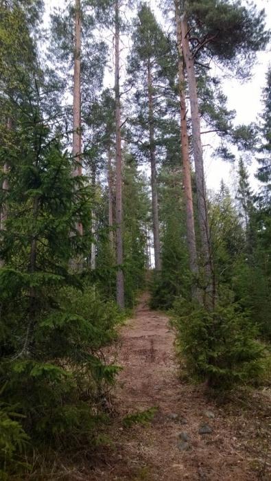 Ilvesjuoksu Lopella ja Riihimäellä la 17.5. Uskoisin, että yksi tapahtuman puuhamies Juha Viitalakin aloitti polkujuoksunsa tässä mäessä ja tällä polulla 1980-luvulla