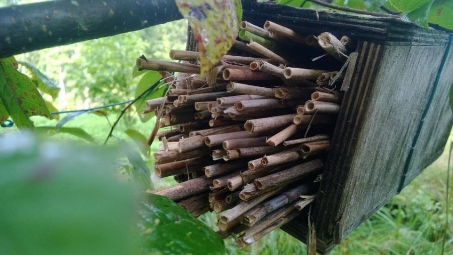 Ja illansuussa lasten kanssa teimme puusta pudonneesta linnunpöntöstä hyönteishotellin. Toimivat erinomaisesti ja ensi keväänä jälleen pölyttäjiä ja elämää puutarhassa riittää. Suosittelen.