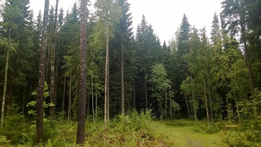 Ja tässä sitten Iso-Korkeen reunaa hakkuulta eteenpäin kohti Loppijärveä. Isot alueet hyvässä hoidossa ja käytössä.