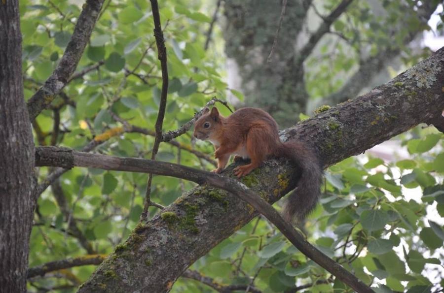 Hyvää Suomen Luonnon päivää. Meidän kodin Kurre ison haavan suojissa. Minulle vaan tuo metsä on sellainen juttu. Sinne sitä aina vaan kaipaa ja ennen muuta puiden luo. Puumies ja monen mielestä puupääkin :)