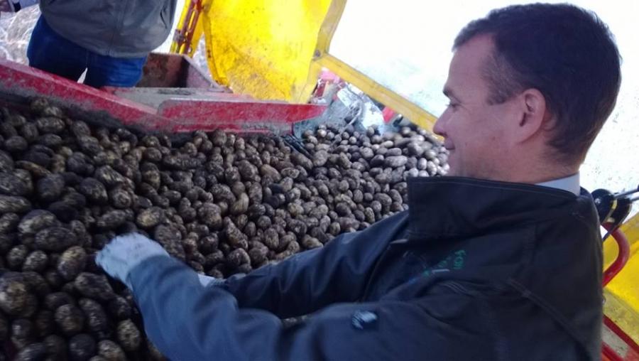Ja huippukoneilla 20 minuutissa nostimme 7000 kg uutta hyvää Lopen Perunaa. Ministerin ja minun nostamat potut kaupoissa pääkaupunkiseudulla jo puolenviikon tietämissä. Hakekaahan omanne K-Marketeista.