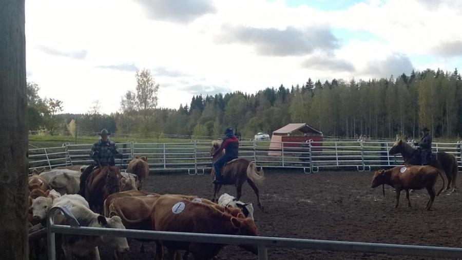 Launosten Kartanolla järjestettiin tänään lännenratsastuksen karjalajien kilpailut. Upea tapahtuma ja hienoja suorituksia. Ja muuten ensimmäistä kertaa Suomessa.
