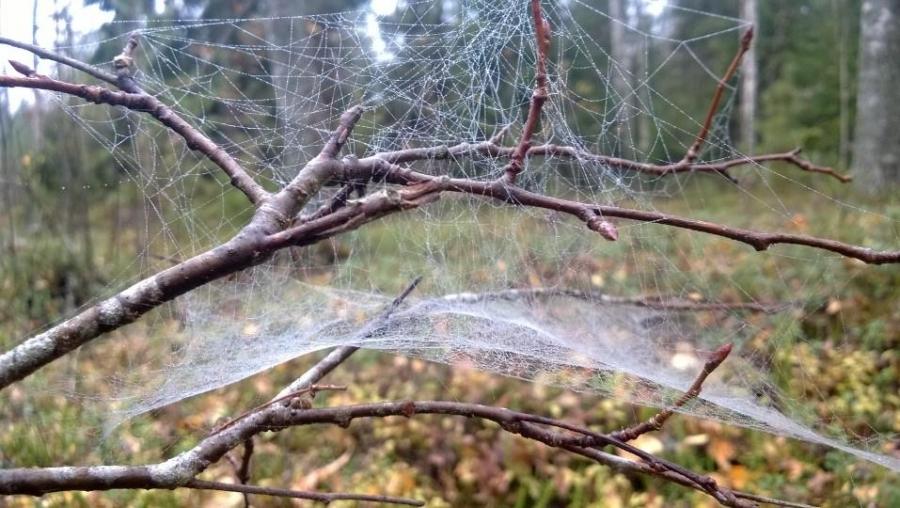 Mutta mahti päivään lapsen kanssa aamun lenkki metsässäkin. Upea usvainen syysaamu ja hämähäkinkin verkot kosteina.