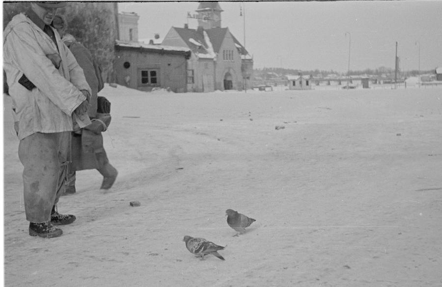 Kyyhkyjä sodan rintamalla vanhassa SA-Kuvassa. Kyyhkyset myös pääosassa kasvattajansa Frans Jokimiehen kanssa Heli-Maija Heikkisen esikoisromaanissa Viestikyyhkyupseeri.