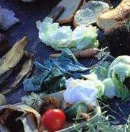 Kaduille ja luontoon heitetyt jätteet luovat hyvän pohjan kasvavalle rotta- ja lintuongelmalle. Myös nyt aloitettavan lintujen talviruokinnan kanssa tulee olla tarkkana. Talviruokinta on tarpeellista ja välttämätöntä, mutta se pitää osaa hoitaa niin ettei rotta- ja hiiriongelmaa pääse syntymään.