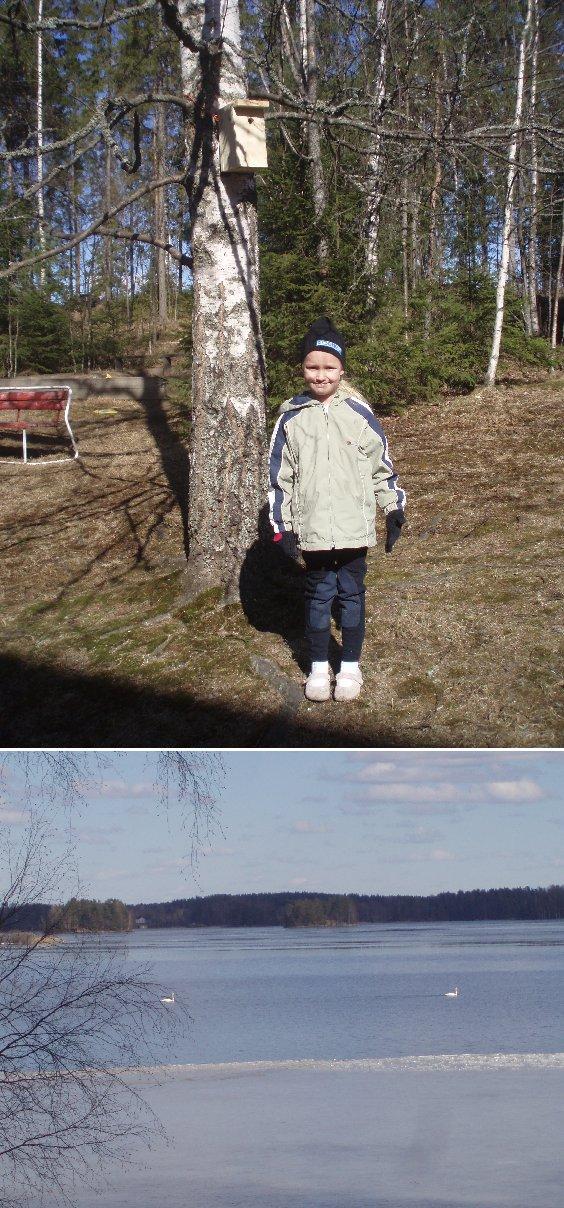 BirdLife Suomi ry on lintujen suojelu- ja harrastusjärjestö. BirdLife Suomen tavoitteena on linnustonsuojelun ja lintuharrastuksen kautta edistää luonnon monimuotoisuuden säilymistä ja kestävää kehitystä. BirdLife Suomi on osa kansainvälistä BirdLife International -järjestöä. Tässä Venla uuden kotipihamme pöntön kanssa ja järvellä joutsenet odottamassa pesintäsäitä. Vasemmassa reunassa näkyvällä Kivikarilla joutsenet pesineet jo monta vuotta ja vastarannalla mökkimme naapurissa kurjet samoissa puuhissa.