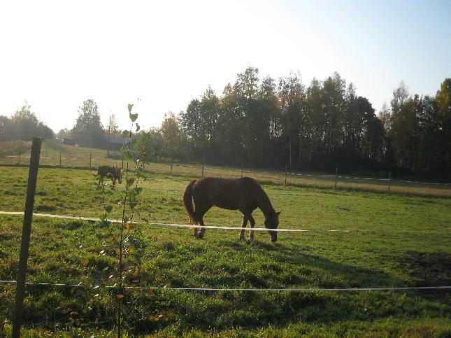 Aamulla ratsastamaan. Tänään aamupäivä varattu Eduskunnassa liikunnalle. Osa curlingia pelaamassa, osa kai uimassa ja me ratsailla. Upea lämmin syysaamu.