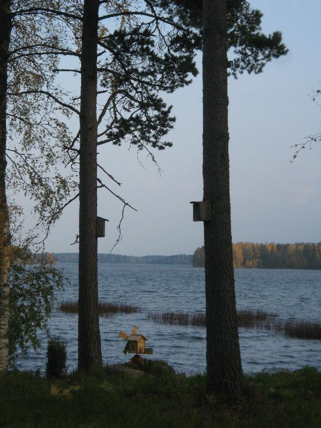 Syksyinen Loppijärvi. Tuulimylly sai Pekkalan rannassa kyytiä ja linnut olivat jo muuttolla.