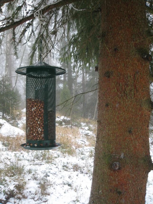 Tänään Pekkalan oravat ja tintit saivat ruokaa. Pyydän anteeksi. Luvattoman myöhään.