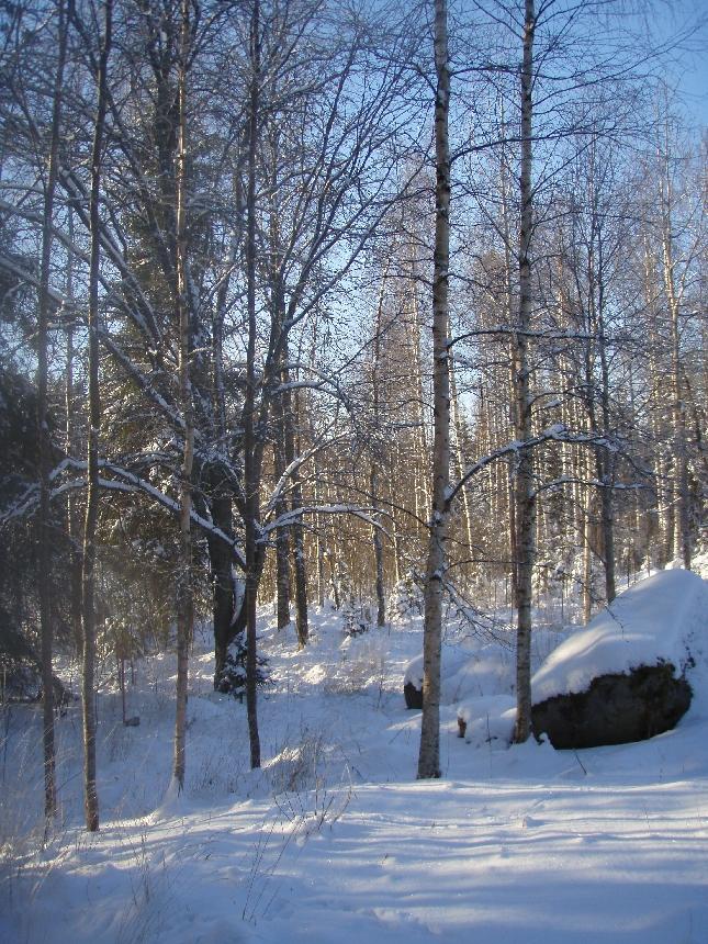 Upea talvipäivä. Tällaista oli viime viikon Lapissa ja nyt saamme nauttia samasta täällä. Teki hyvää pieni ulkoilu ja reippailu.