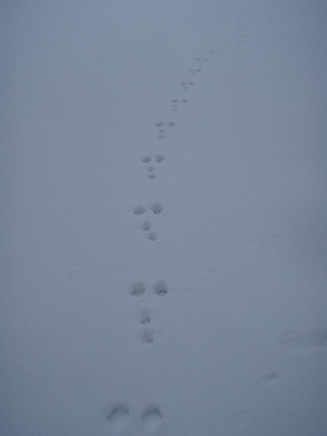 Talvea Pekkalan mökiltä Loppijärveltä. Upea päivä ja rentouttavaa aivan yksin ja hiljaa.